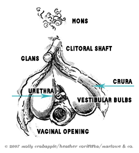 The Infamous Clitoris