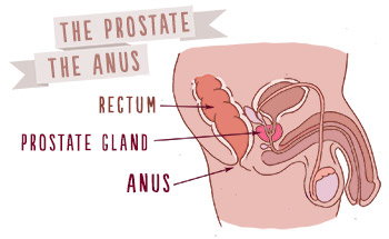 (Your anus is in the same place if you don't have a penis.)