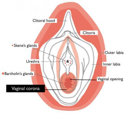 Vagina Hyme 63