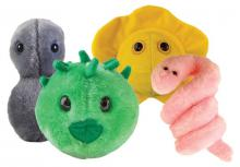 Four microbe plush toys of the bacteria and viruses that cause gonorrhea, chlamydia, herpes, and syphilis.