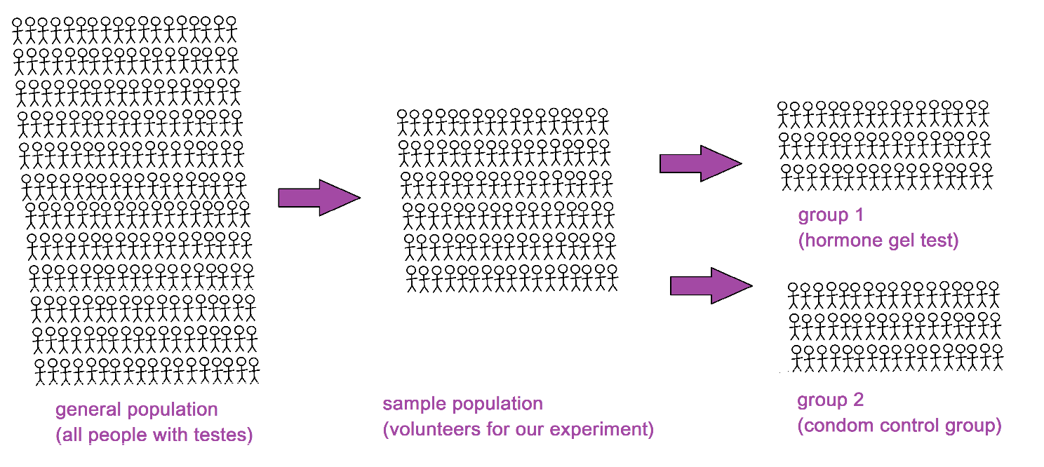 Image showing visual representation of population sizes with the general population(all people with testes) as the largest, then the sample population(volunteers for our experiment) which is then split into group 1(hormone gel test) and group 2(condom control group)