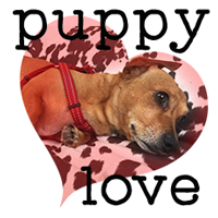 Puppy Love: The Do's & Don'ts of Crushes (With Help from a Very Small Dog)