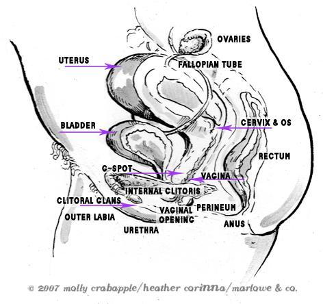 female internal